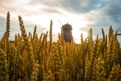 Windmill in the field in sunset Royalty Free Stock Photos