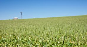 Windmill in field of wheat Royalty Free Stock Photo