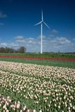 Windmill in the fields with flowers Stock Photo