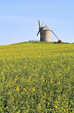 Windmill in flower field Stock Photos