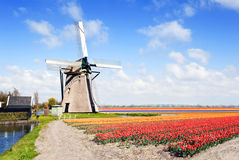 Windmill and flower fields Royalty Free Stock Images