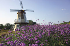 Windmill and flower garden Royalty Free Stock Photos