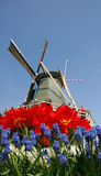 Windmill & flowers Royalty Free Stock Image