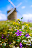 Windmill and Flowers in Beauvoir in Normandy, France Royalty Free Stock Image