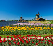 Windmill in holland. Photo of windmill in Holland with blue sky Royalty Free Stock Photos
