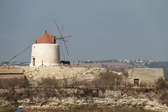 Windmill and horse. Landscape with windmill and horse Royalty Free Stock Image