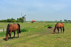 Windmill and horses on farmland Stock Photos