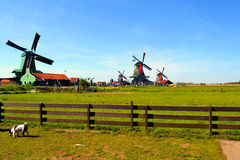 Windmill i Zaanse Schans royaltyfri foto