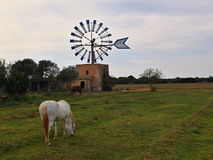 Windmill at island of Majorca in Spain. One of theTypical windmill at the island of Majorca in Spain with horses in the front royalty free stock images