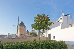 Windmill in La Llonja Stock Images