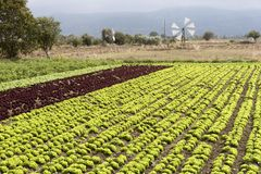 A Windmill and rows of salad crop being irrigated. Windmill and mountains on the Lasithi plateau Crete, Greece. October 2017. Windmills pump water to this Cretan Stock Photos