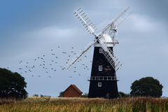 Windmill on Norfolk Broads. With birds flying by Royalty Free Stock Photos