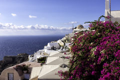 Windmill Oia on Santorini. With pink flowers in foreground Stock Images