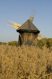 Windmill old wooden behind cane. Spectacular windmill old wooden behind cane on a beautiful autumn day with blue sky Royalty Free Stock Images