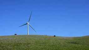 Windmill in a pasture with cattle grazing. Camera locked. stock footage