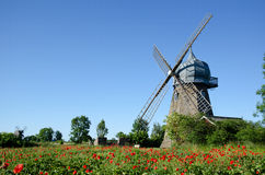 Windmill and poppy field. In the island Oland in Sweden Royalty Free Stock Images