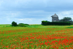 Windmill and poppy field Stock Photo