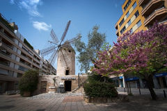 Windmill in Quattro Molinos. PALMA DE MALLORCA, BALEARIC ISLANDS, SPAIN - APRIL 6, 2016: Windmill and blossoming trees in the area Quattro Molinos in Palma de Stock Photo