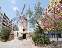 Windmill in Quattro Molinos. PALMA DE MALLORCA, BALEARIC ISLANDS, SPAIN - APRIL 6, 2016: Windmill and blossoming trees in the area Quattro Molinos in Palma de Stock Photos