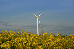 Windmill and a rape field Stock Photos