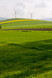 Windmill and rape field Stock Images