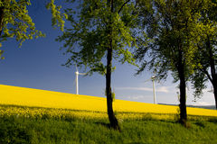 Windmill and rape field Stock Photo