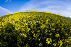 Windmill and rape field Royalty Free Stock Photos