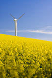 Windmill and rape field Stock Image