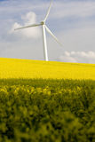 Windmill and rape field Royalty Free Stock Photography