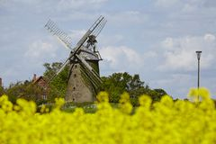 Windmill Seelenfeld (Petershagen, Germany) with colza field Stock Photos