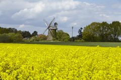 Windmill Seelenfeld (Petershagen, Germany) with colza field Stock Photo