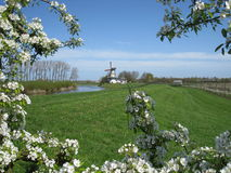 Windmill seen through blooming fruit tree Stock Images