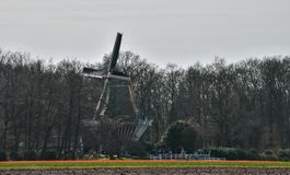 Windmill in spring in the Netherlands near Keukenhof stock image