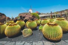 Windmill in tropical cactus garden in Guatiza village, popular attraction in Lanzarote Royalty Free Stock Photography