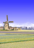 Windmill at the Tulip Bulb Farm, Netherland Royalty Free Stock Photo