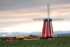 Windmill in tulip field Stock Image