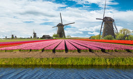 Windmill with tulip field in Holland Royalty Free Stock Photos