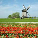 Windmill with tulips Royalty Free Stock Photos