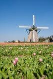 Windmill & tulips Royalty Free Stock Photos