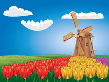 Windmill and Tulips Royalty Free Stock Image