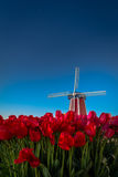 Windmill and tulips with the night sky Royalty Free Stock Photos