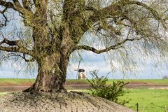Windmill in a typical dutch landscape Stock Photography