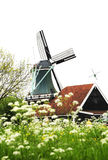Windmill Village And Flower Royalty Free Stock Photo