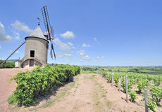 Windmill among vineyards Stock Photo