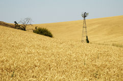 Windmill in a wheat field Royalty Free Stock Photography