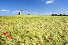 Windmill and wheat field Stock Image