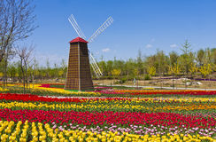 Free Windmill With Tulip Field Royalty Free Stock Photos - 19371068