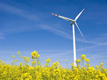 Windmill in yellow field. A photo of a windmill in a bright yellow field of  oilseed rape plants