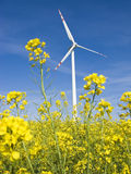 Windmill in yellow field. A photo of a windmill in a bright yellow field of  oilseed rape plants Royalty Free Stock Photos