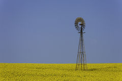 Windmill in Yellow Field Stock Photos